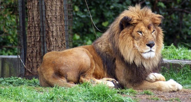 leon on скачать